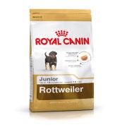 Bhn rottweiler junior -